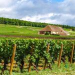 Vignes Bourgogne Beaune