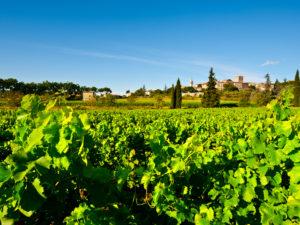 Vignoble Rhône_sh