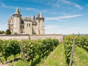 vin Loire vigne
