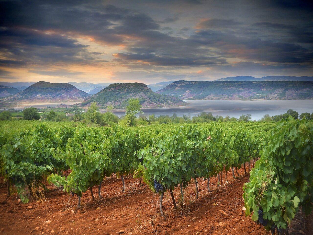 vin rouge languedoc